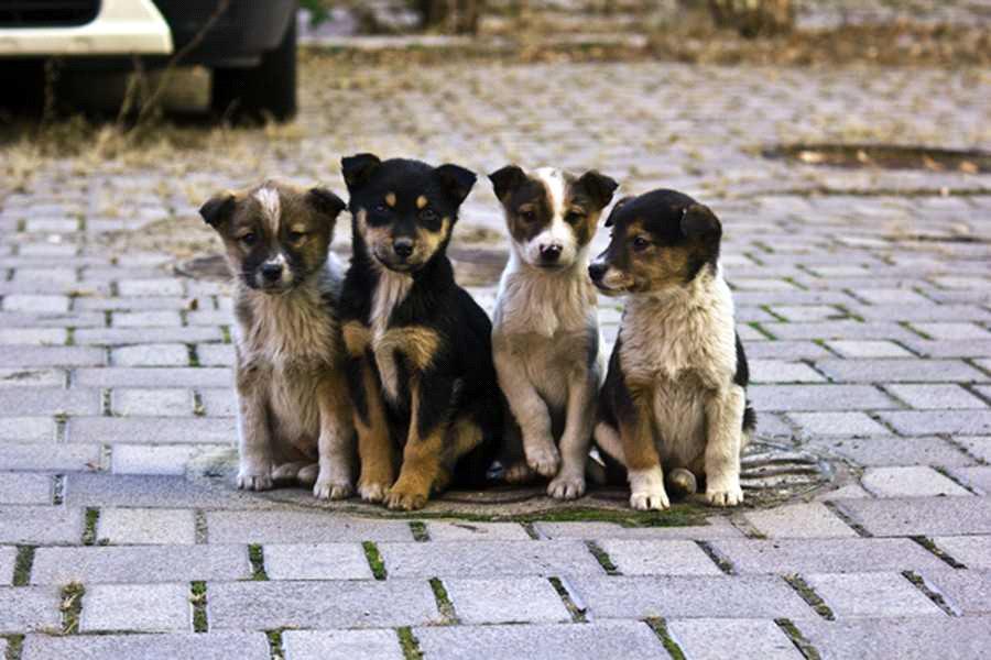 Безпритульні тварини – наша спільна відповідальність - Вісті Черкащини