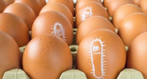 У курячих яйцях на Черкащині виявили сальмонельоз