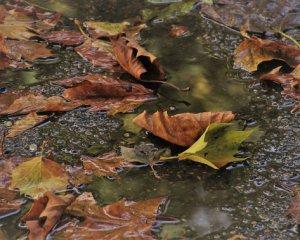 Дощі заливатимуть Україну, але тепло не відступить